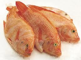 Röd tilapia fisk