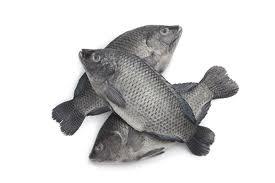 Svart tilapia fisk